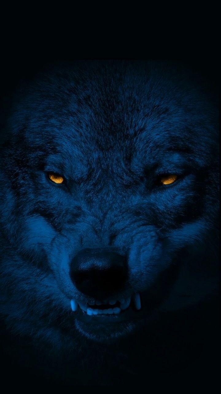 @phoenixwolf397